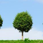 The Three Trees – Anonymous
